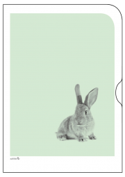 Schoene-Tiermotive-Hase-O