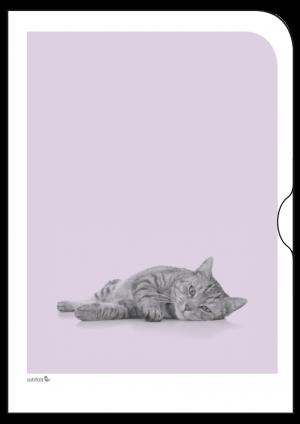Schoene-Tiermotive-Katze-O